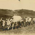 Campo sperimentale agricolo - Valona